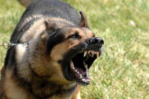 angrydog